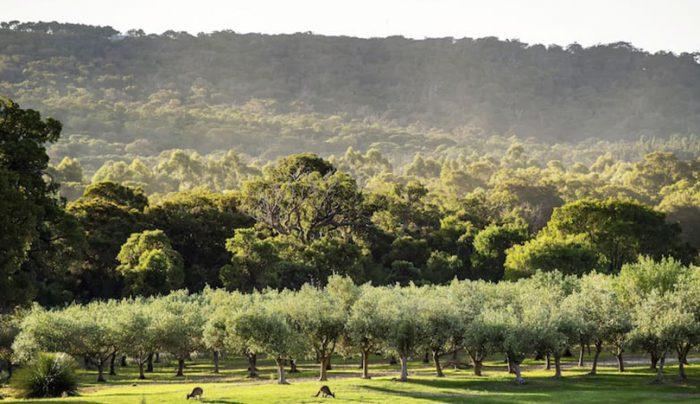 Olive Oil Estate